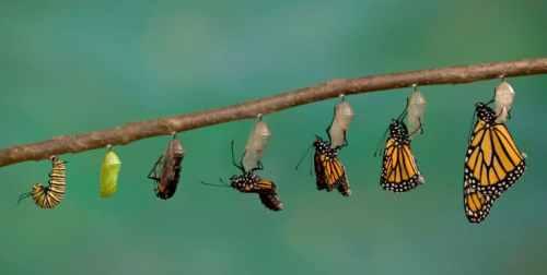 Perspectiva mariposa – Psic. Agustín Menéndez