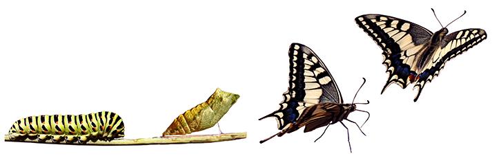 de-gusano-a-mariposa (1).jpg